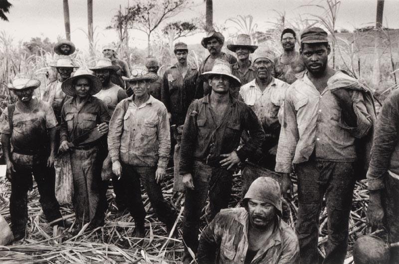 Sugarcane Brazil and Cuba