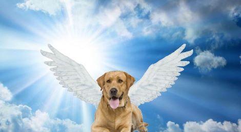 1dog-wings1