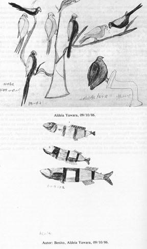 2 Disegni Waimiri-Atroari